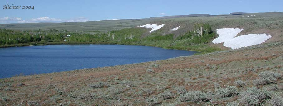 Wildflower bloom at fish lake on the steens mt july for Fish lake oregon