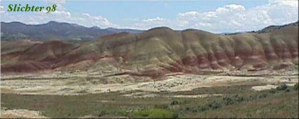 Wildflowers Blooming At The Painted Hills John Day Fossil