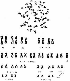 Karyotyping